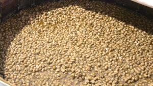 Soybeans are added and the fermentation and breakdown of proteins continues. It will take a year before it's ready.