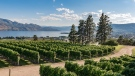 View from the Mission Hill Family Estate Winery in Kelowna, B.C. (Mission Hill Family Estate Winery/Facebook)