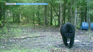 Black bear (Trapper Micks Bear Hunting)