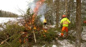 Wildfire mitigation work is underway in Sask. (Lisa Risom/CTV News Saskatoon)