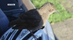 Sawatsky Sign-Off- Talking with Wildlife