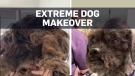 Shelter dog makeover