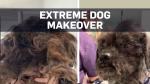 Shelter dog makeover