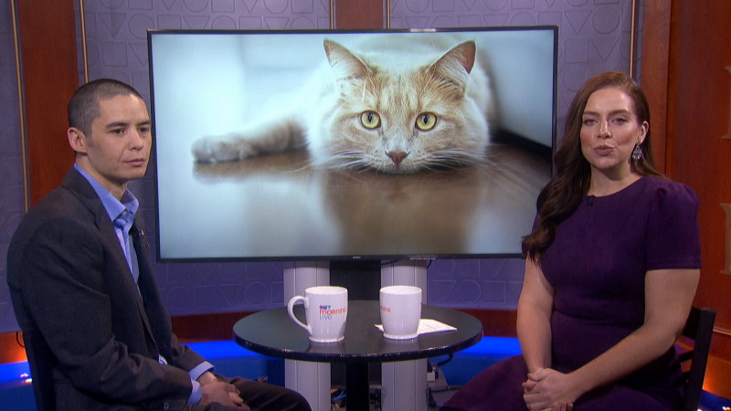 New study reveals how cats hide their pain. We'll speak to the Calgary researcher involved with the findings