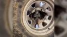 wheelie pup
