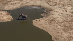 The Calgary chapter of the Safari Club International says an elephant hunt auction, that was to take place Saturday evening, has been cancelled.