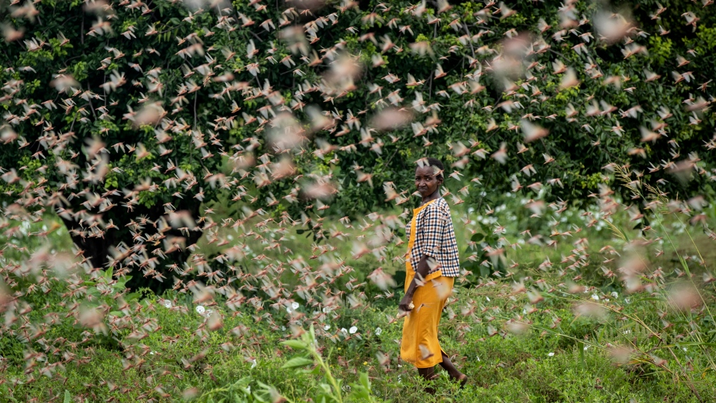 'This is huge': Locust swarms destroy crops in East Africa