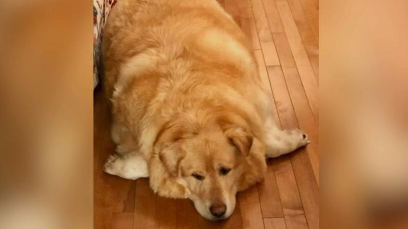CTV National News: Dog's inspiring weight loss