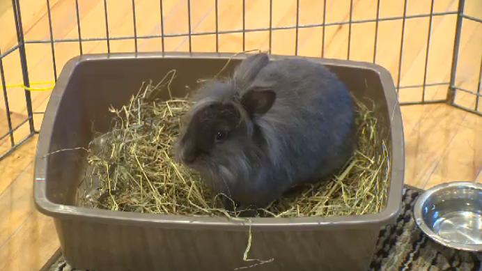 Bunny Blitz