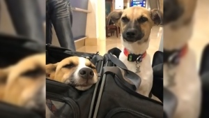 Dogs from Mexico find homes in Calgary