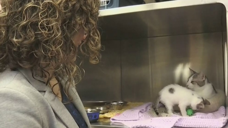 Over 100 cats recovering after rescue from home