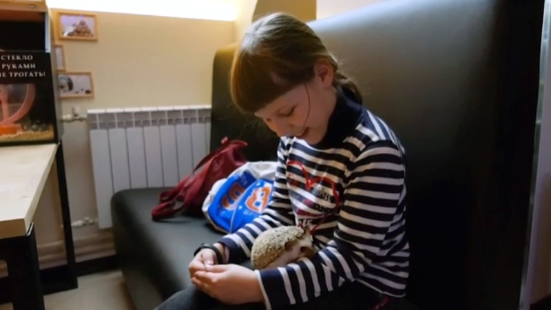 Hedgehog cafe becoming a popular attraction