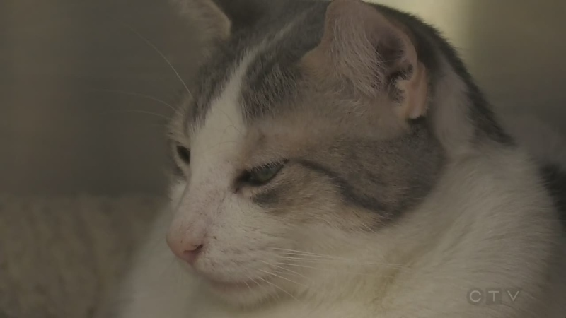 Humane society raises $30K to help treat cats