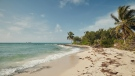 Airbnb is partnering with the Bahamas' national park service to offer five people a chance to move to the country for two months, as part of efforts to lure tourists back to the island after a devastating hurricane. (Courtesy Airbnb)