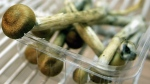 Cancer patients who were given psilocybin reported reductions in anxiety and depression. (Source: Daniel Berehulak/Getty Images)