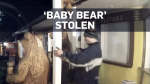 Caught on cam: Thief steals baby bear statue