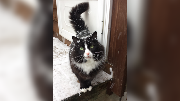 Picture This- Pets enjoying the snow