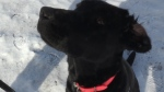 Dogs get sick after walking on same Guelph trail