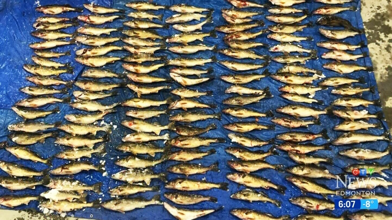 Illegal fish trafficking operation shut down