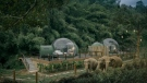 The Anantara Golden Triangle Elephant Camp and Resort's new 'jungle bubbles' are seen in this image (Anantara.com)