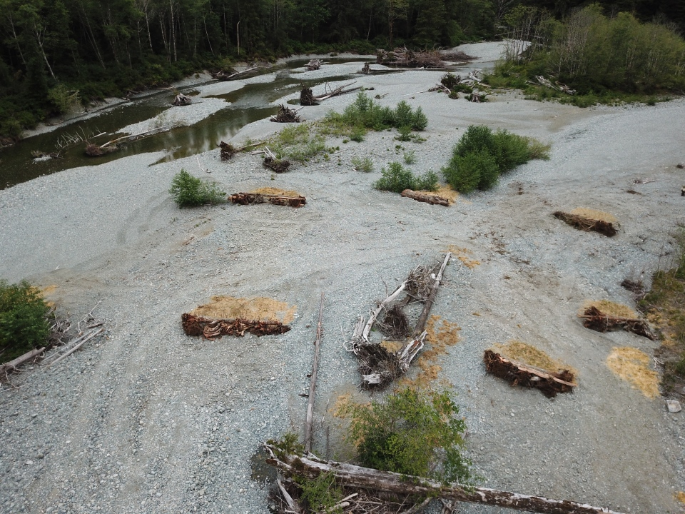 The Central Westcoast Forest Society is asking for logs to help rehabilitate an island salmon-bearing stream: (The Central Westcoast Forest Society)