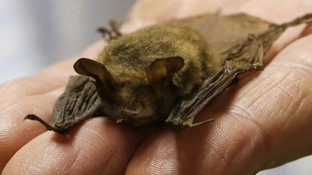 Bat News