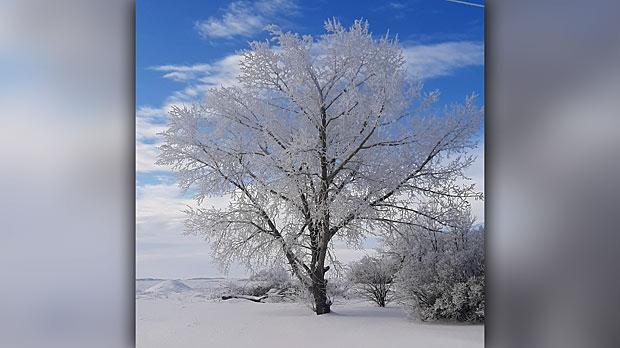 Winter is pretty. Photo by Annie Hughes