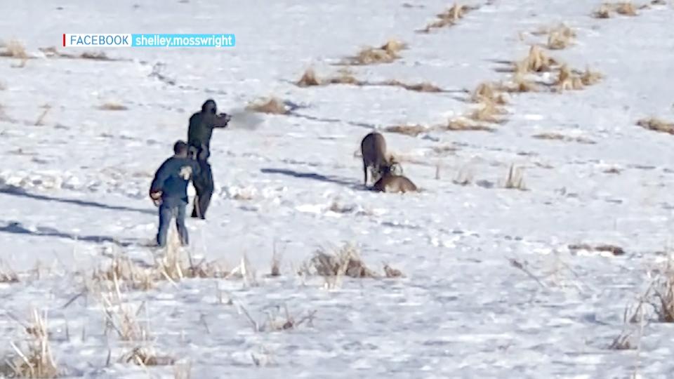 Deer shot Calgary