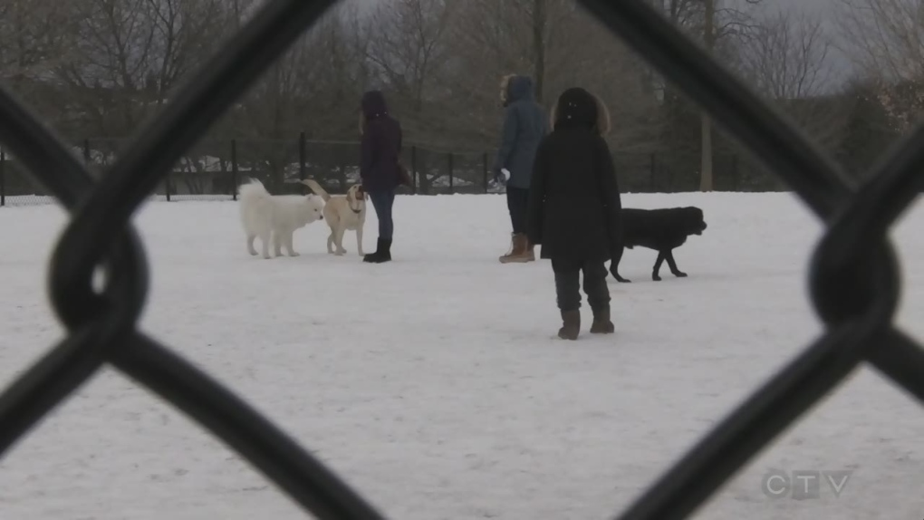 Fenced-in dog parks could disappear from Guelph