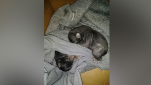 The bear cubs were found on January 28. (The Camden County Sheriff's Office)