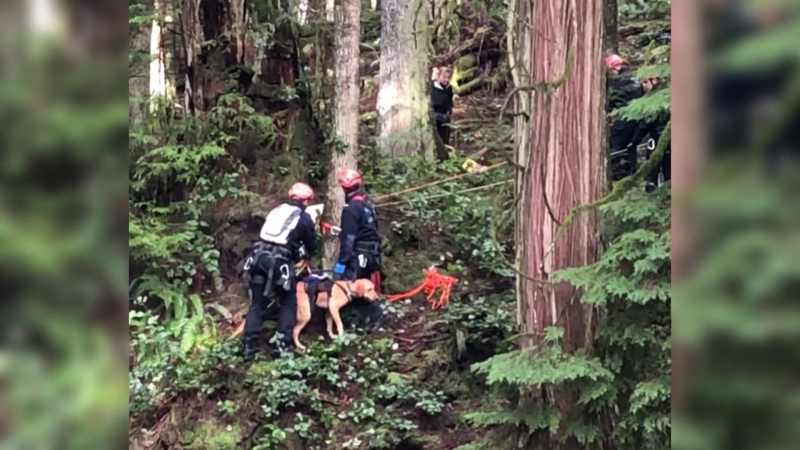 West Vancouver fire crews rescued a one-year-old golden Labrador that had gotten itself stuck on a ledge above a fast-moving waterway on Saturday, Feb. 8, 2020. (West Vancouver Fire Department)