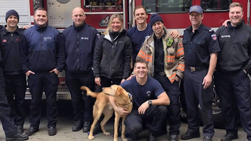Dog rescued off West Vancouver cliff