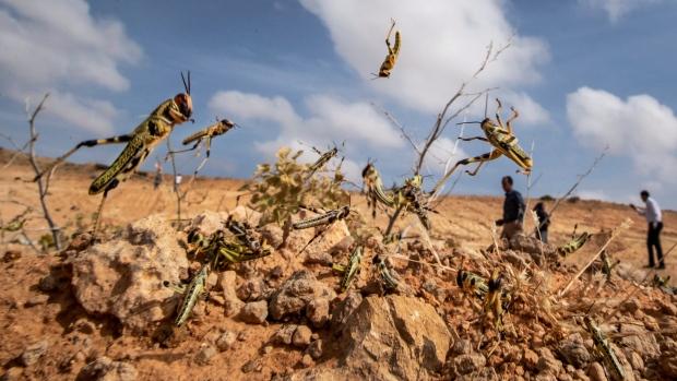 Huge locust outbreak in East Africa reaches South Sudan