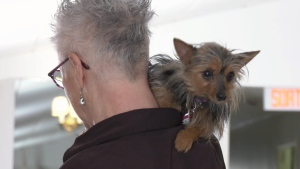 Pudding was one of the fluffy friends looking for a home from the Animatch Animal Shelter at the Bark and Bite brunch in DDO.