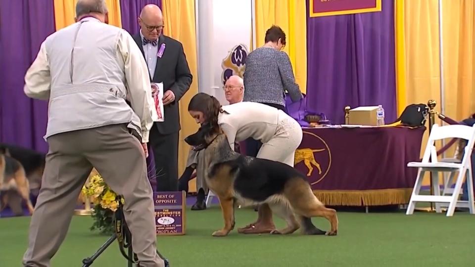 Local German Shepherd wins big
