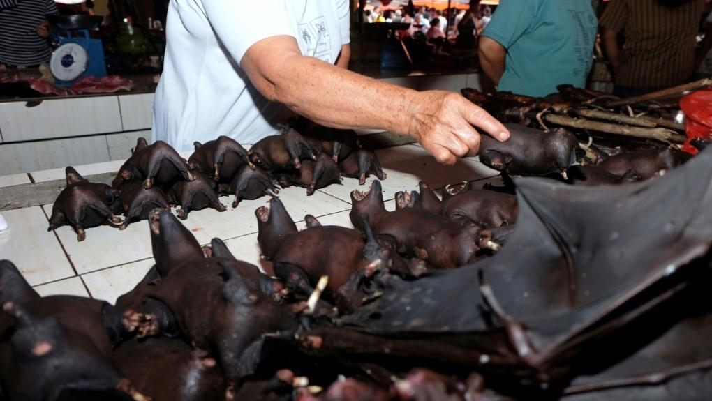 Bats for sale at Indonesia's wildlife market despite virus warning ...