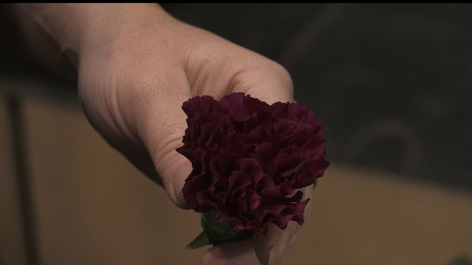 Free carnations being handed out in downtown Sault