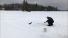 Watch as a man has a close encounter with a mink while ice fishing on a northern Ontario lake in Magnetawan. (Tracey Hannah)