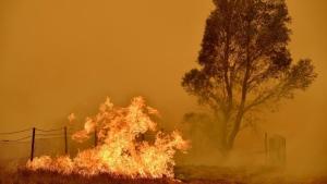 The Australian bushfires raged for months, devastating thousands of kilometres of land. (AFP)