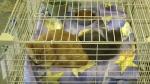 Edmonton animal rescue being shut down