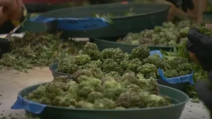 Eskasoni considers opening cannabis dispensary