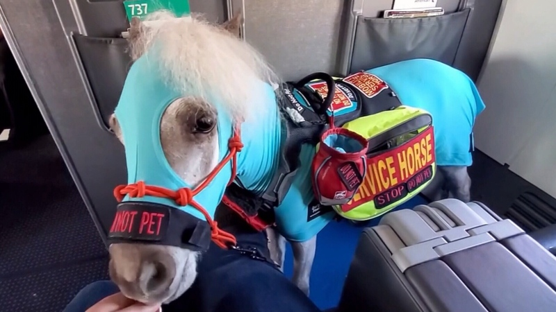 Mini service horse takes first successful flight