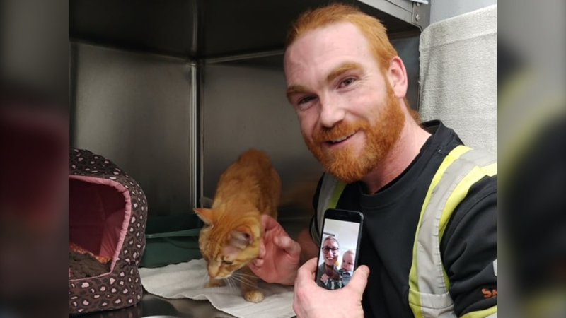 In a Facebook post, the shelter says an orange cat admitted to its facility as a stray on Feb. 11 bore a striking resemblance to Hunter, a family pet that had been reported missing on Dec. 31. (Facebook/Delta Community Animal Shelter)
