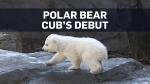 Polar bear cub makes debut at Vienna zoo
