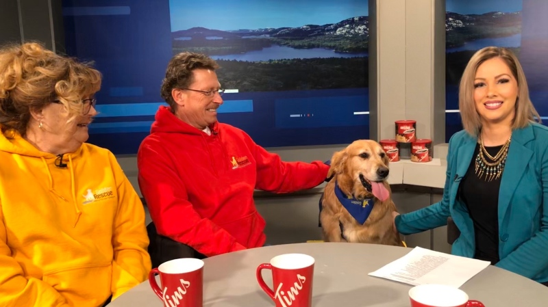 Terri and Denis Pilon with their dog Spencer they adopted from Golden Rescue. (Chelsea Papineau/CTV Northern Ontario)