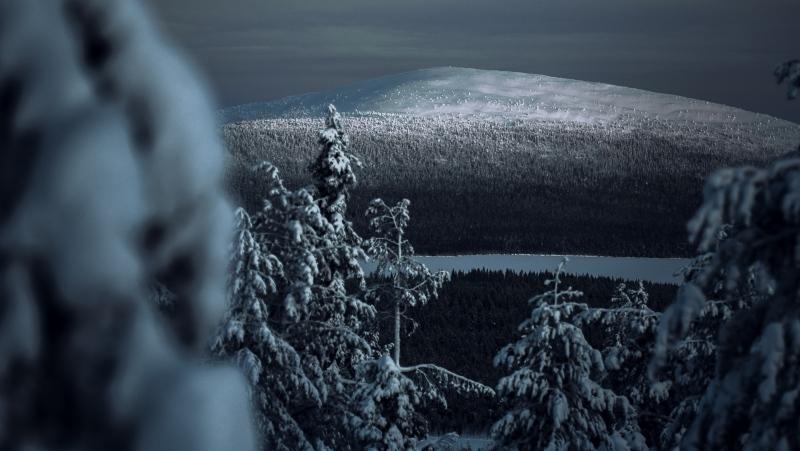 Dark forest (Pexels)