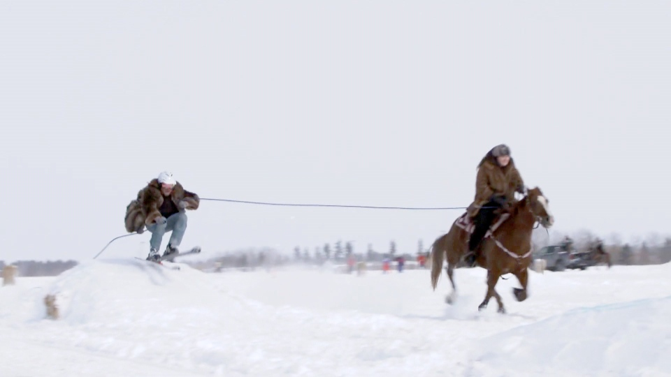 The sport of skijoring sees a skier or snowboarder pulled behind a galloping horse.