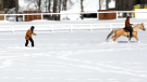 Skijordue blends horseplay with winter sports.