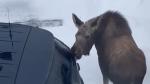 'Classic Alaskan car wash' in Anchorage