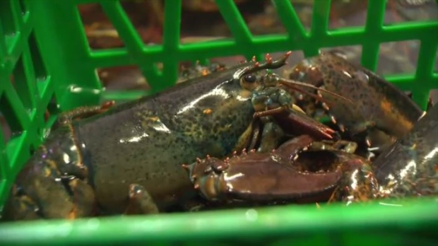 Coronavirus outbreak reduces demand for N.S. lobster in China